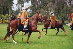 Caballos de Paso de la Hacienda Mamacona